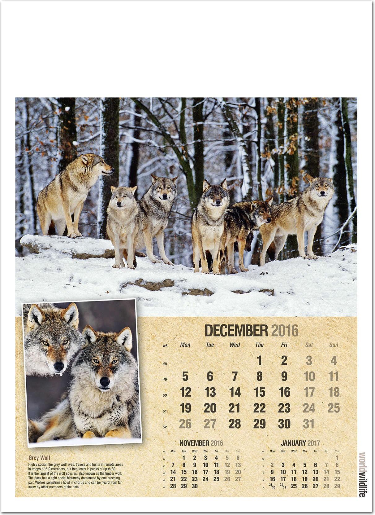 World Wildlife Wall Calendar 2016 Rose Calendars